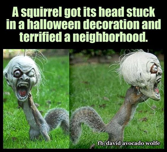 halloween-squirrel